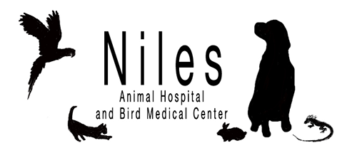 Pet Poems, Quotes and Stories | Niles Animal Hospital & Bird