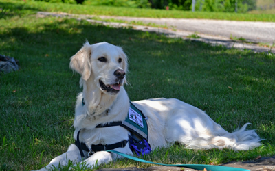 image for April 26th is International Guide Dogs Day