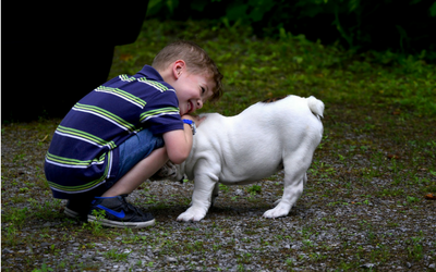 image for Be Kind to Animals Week – May 7-13