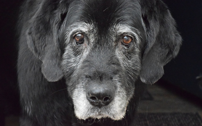 image for November is Pet Cancer Awareness Month